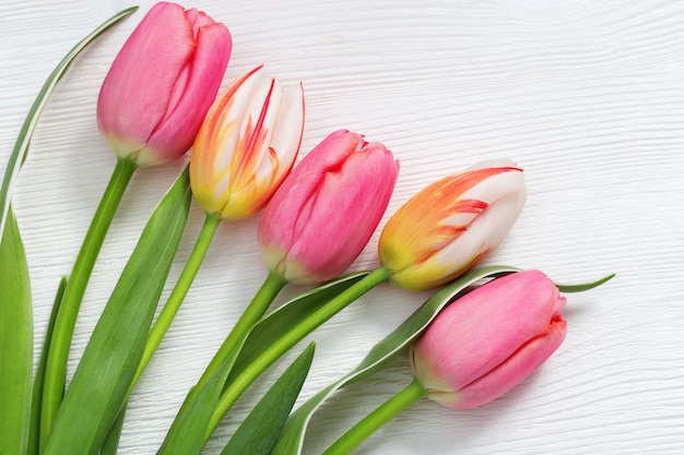 Bright natural tulips flowers