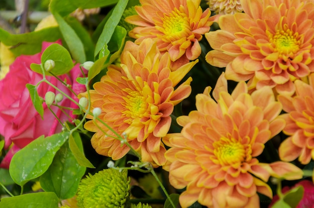 Bright orange composition of fresh autumn chrysanthemums