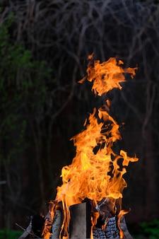 불타는 자작나무에서 나오는 밝은 주황색 불