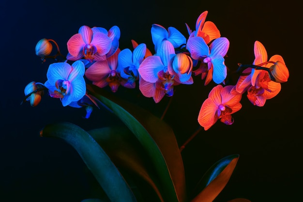 Bright orchid flowers illuminated by neon light on a dark background