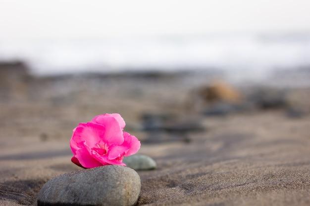 柔らかな夕日の光と空のビーチの岩の上に明るいピンクの花。