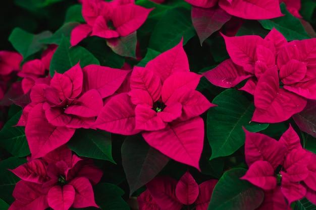 Ярко-розовые цветы на зеленом пространстве.