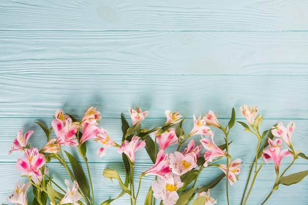 Bright pink flowers scattered on wooden table
