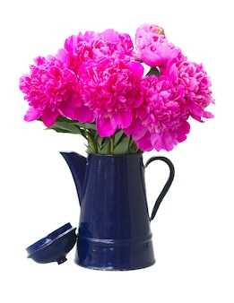 Bright pink peony flowers bouquet in blue pot isolated on white
