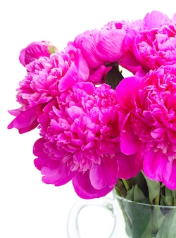 Bright pink peony flowers bouquet close up isolated on white