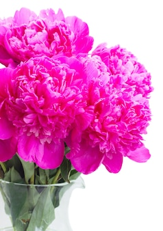 Bright pink peony fresh flowers bouquet close up isolated on white
