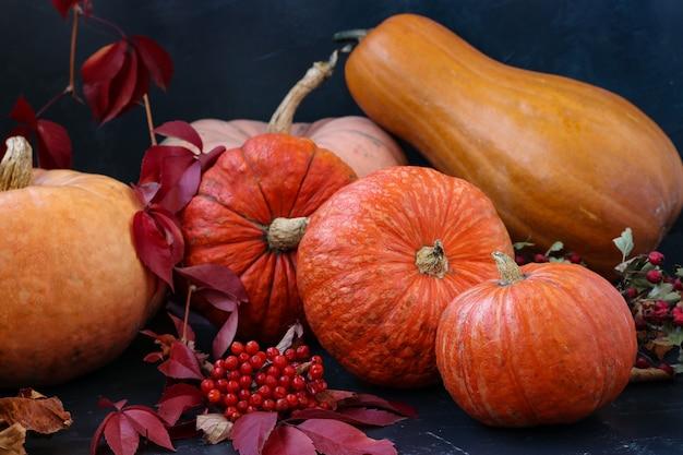 Bright pumpkins on a dark , autumn still life, parade of autumn vegetables, , close up