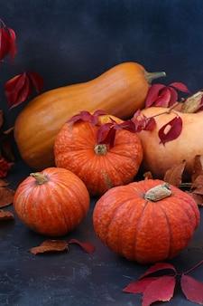 暗い表面に明るいカボチャ、秋の静物、秋野菜のパレード、垂直方向、クローズアップ