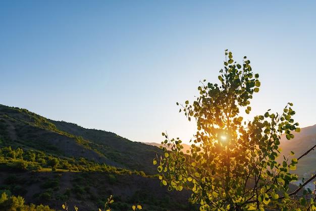 Яркие лучи утреннего солнца сквозь крону дерева