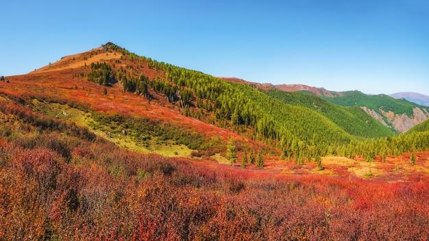 真っ赤な秋の山の斜面。日光の下で森の丘と鮮やかな葉の風景。黄金の緑と森のある絵のように美しい山々。