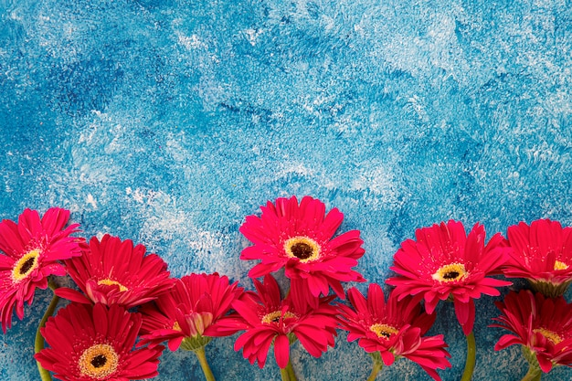 Bright red berbera on blue and white acrylic paint background