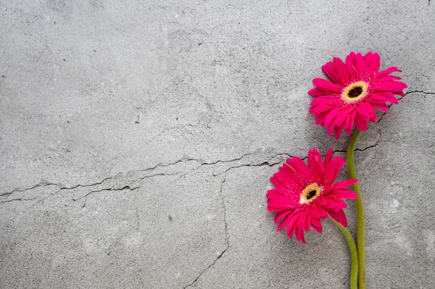 Bright red berbera on cracked concrete surface