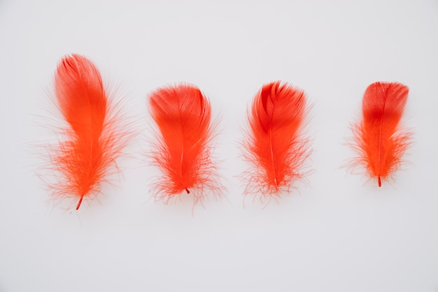 Bright red colored feathers in row