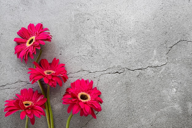 Bright red gerbera on grey concrete background