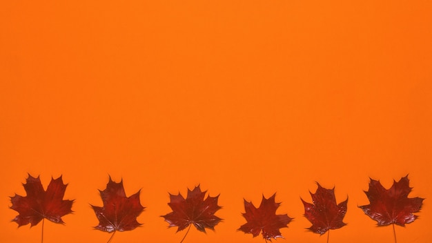 Ярко-красные кленовые листья на оранжевом фоне. плоская планировка.