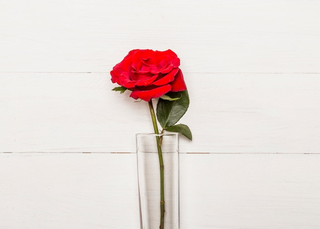 Bright red rose in glass on white surface
