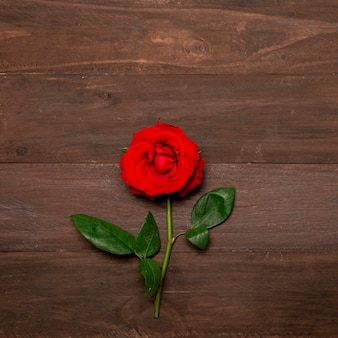 Bright red rose with green leaves on wooden surface