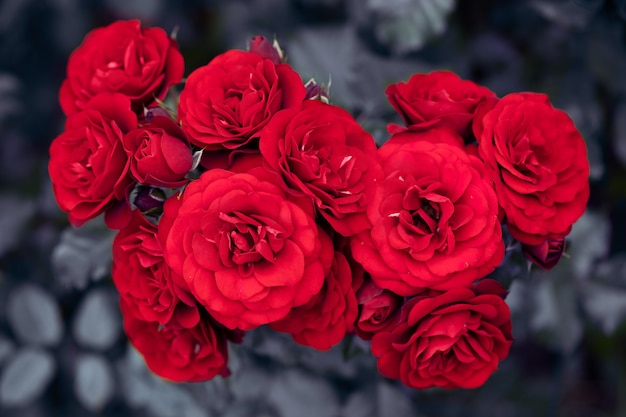 Bright red rose and young flowers. top view, selective focus.