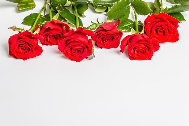 白い表面に分離された真っ赤なバラ