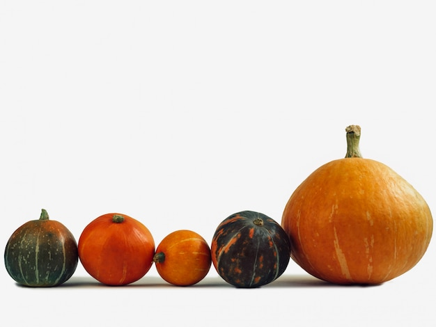 Bright, ripe pumpkins on a white background.
