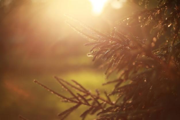 Яркая весенняя зелень на рассвете в лесу. природа оживает ранней весной.