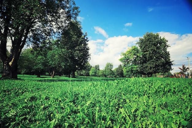 森の夜明けに明るい春の緑。自然は春先に活気づきます。