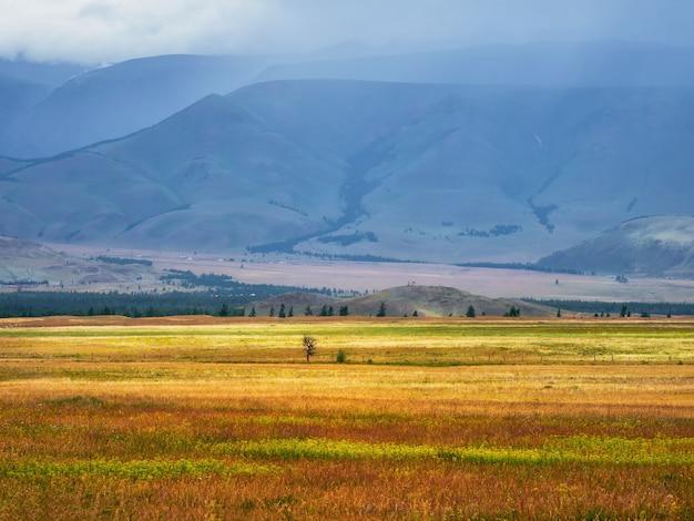 Яркий летний степной пейзаж. степь на фоне гор.