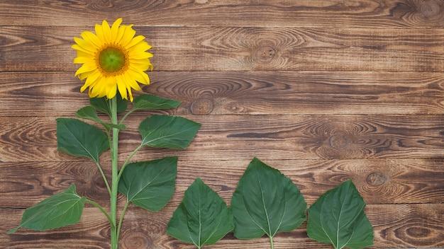 Яркий подсолнух на старом деревянном фоне, зеленые листья и место для вставки текста
