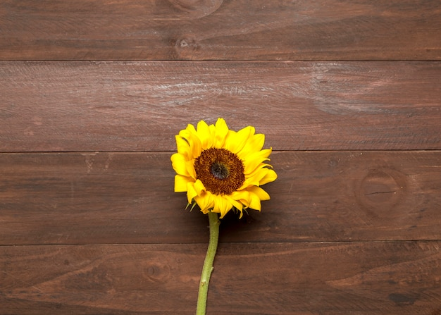 Bright sunflower on wooden background