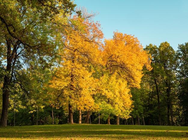 緑の牧草地に大きな黄色の木々と明るく晴れた秋の風景。