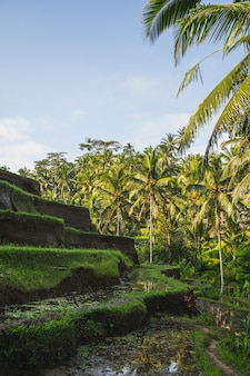 Bright sunny day on bali island, exotic green plants growing