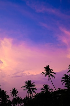 Bright sunset sky in the tropics silhouettes of palm trees against a pink purple sky