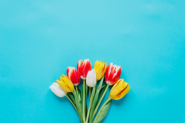Bright tender tulips in bunch