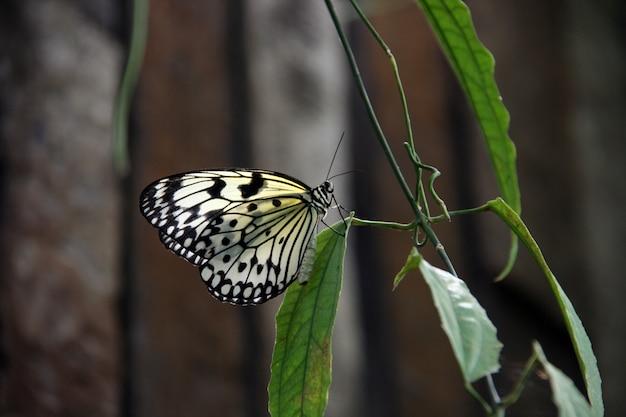 Яркая прозрачная бабочка