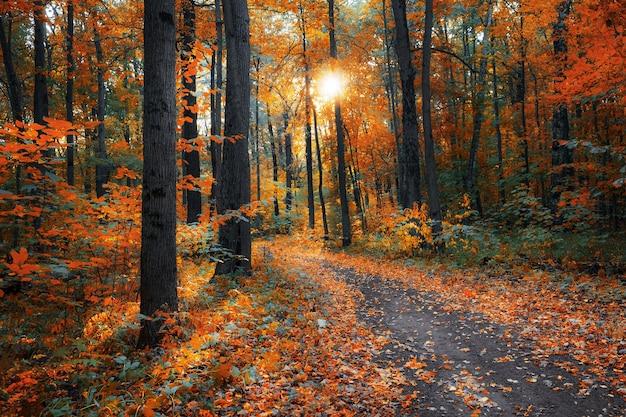 Яркие деревья в осеннем лесу