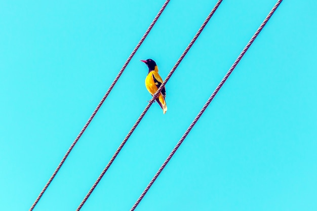 Bright tropical bird standing on a wire