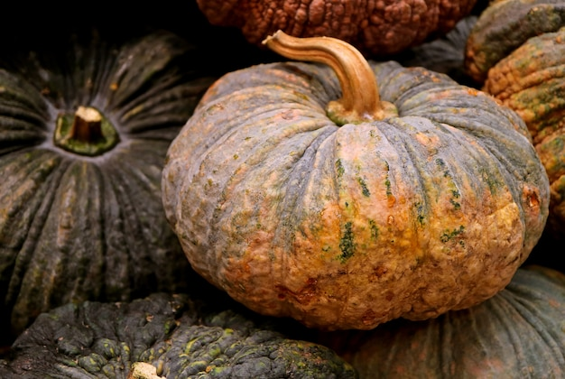 Bright two-tone color pumpkin among dark color others
