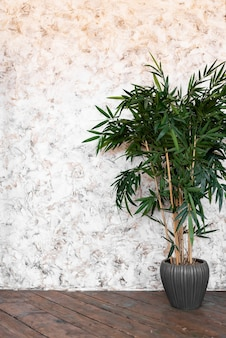 녹색 식물 햇빛 여름 봄 배경으로 밝은 흰색 벽