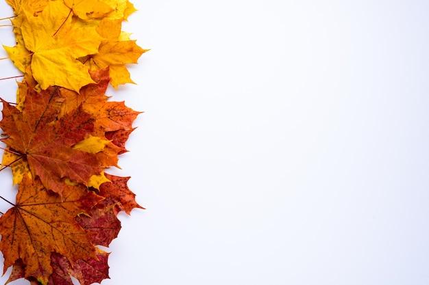 Яркие желтые и коричневые кленовые листья на белом фоне с копией пространства. осенняя композиция