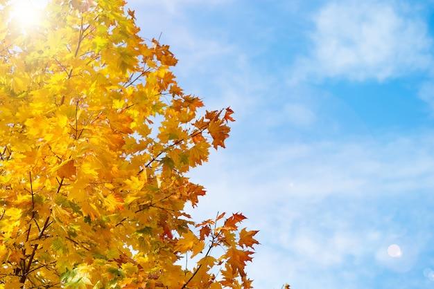 澄んだ青い空を背景の木の上の明るい黄色の紅葉