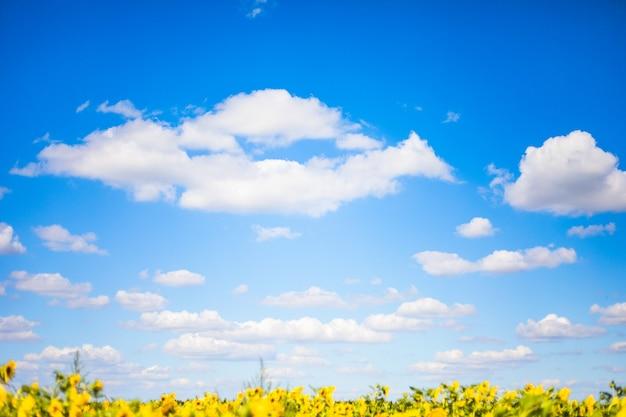 雲と青い空を背景に明るい黄色に咲く牧草地のヒマワリ。日当たりの良い夏の風景。自然な背景。