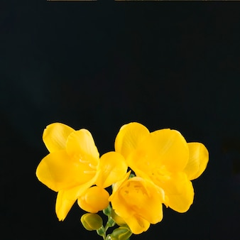 Bright yellow flower on black background