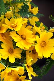 Ярко-желтые цветы, ромашки. селективный мягкий фокус