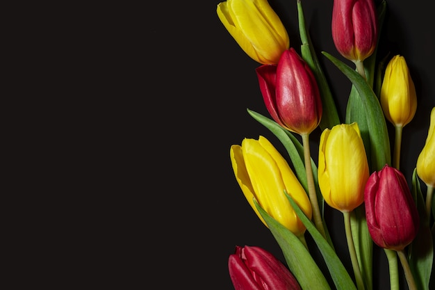 Bright yellow red tulips with dew drops on a black background view from above