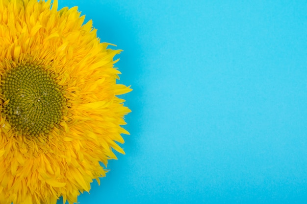Bright yellow sunflower against a bright blue