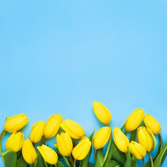 青い背景に明るい黄色のチューリップ。