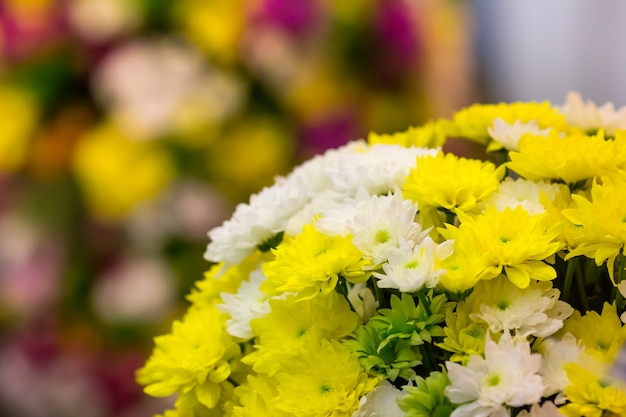 Bright yellow and white marguerites close up