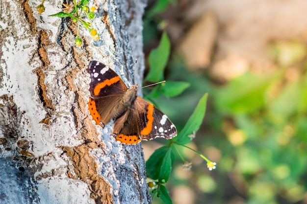 A brightly colored butterfly sits on a tree in sunny weather