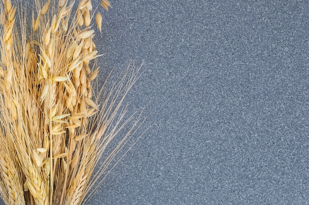Brightly ears of wheat and barley on the background of gray granite.