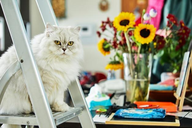 Британский длинношерстный белый кот, сидящий на стремянке на фоне цветов.
